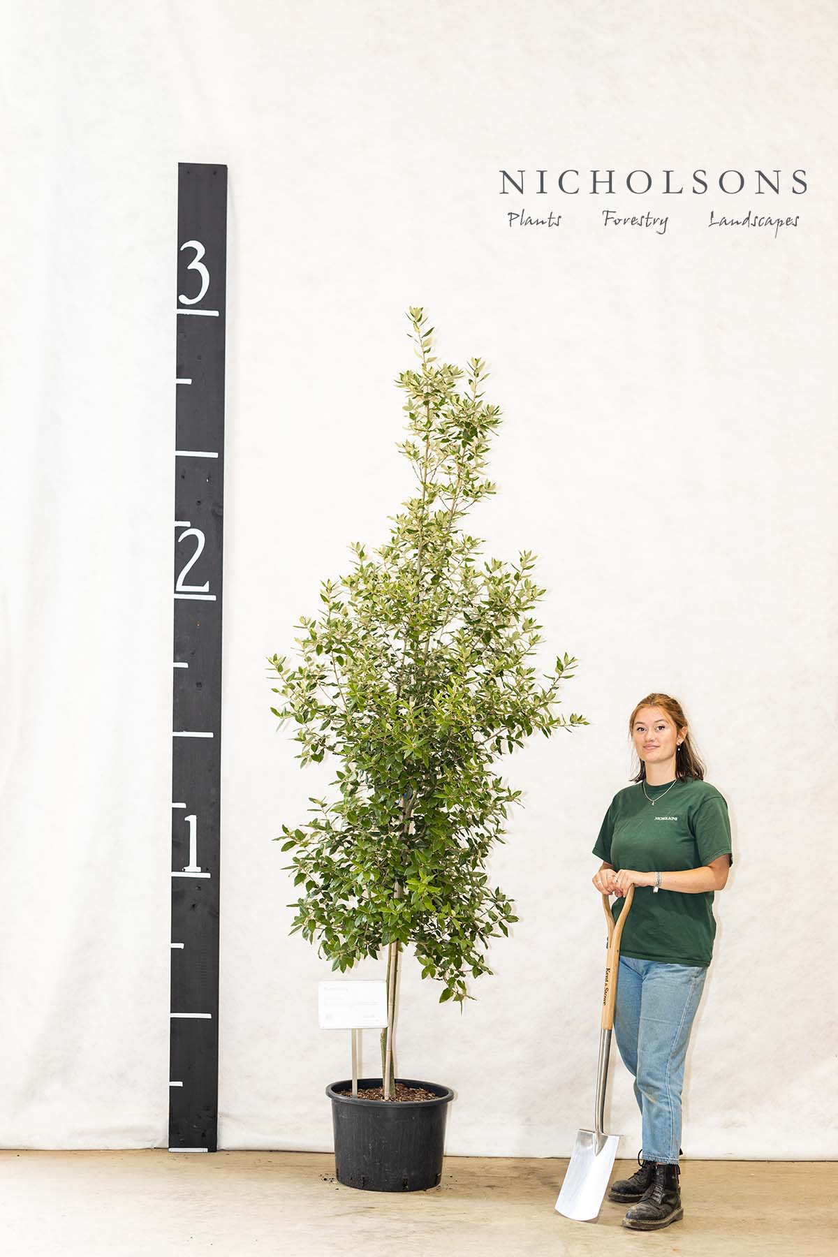 Ornamental Trees Gallery