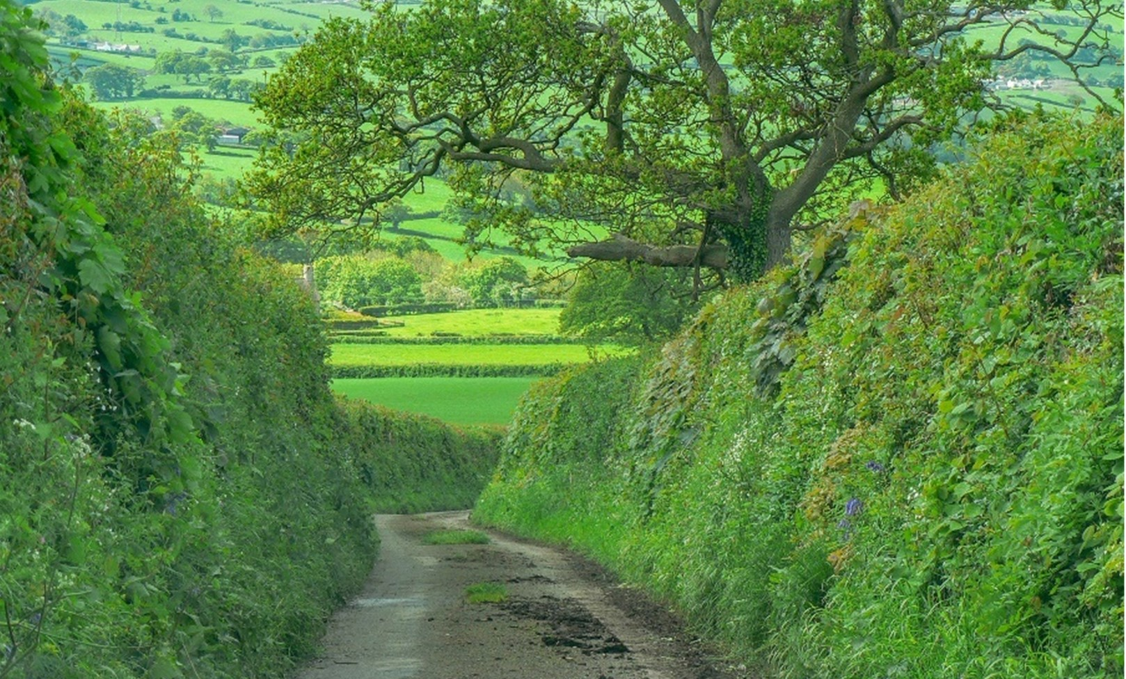 Why Are Hedgerows So Important?